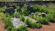 Zo erbarmelijk ligt het kerkhof van Wolvertem erbij