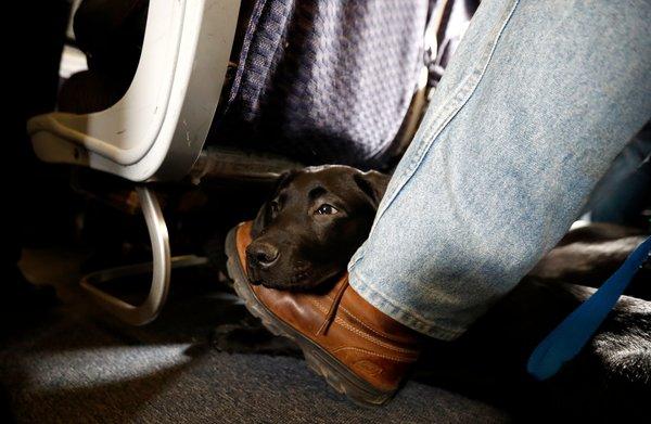 Troosthond niet zomaar meer mee in vliegtuig; slangen, eekhoorns en wasberen verboden