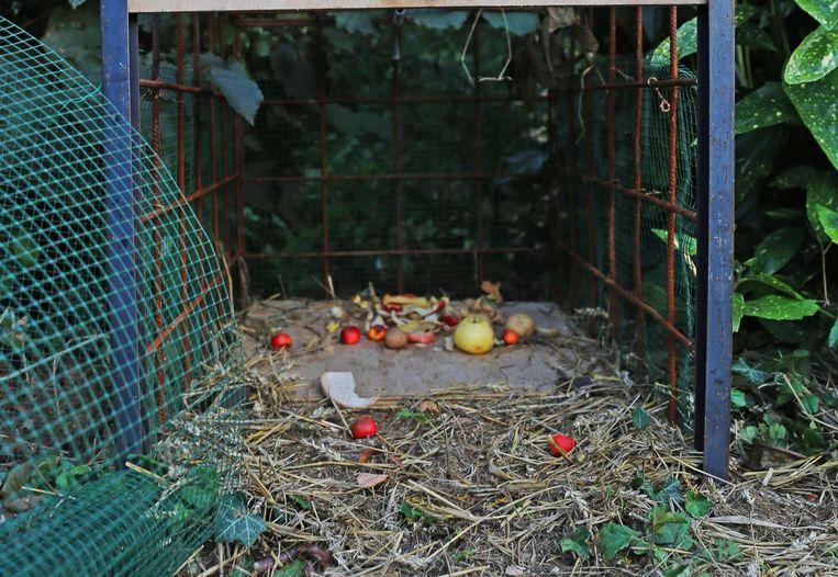 Met enkele appels en brood probeert men het zwijntje in de val te lokken, voorlopig zonder succes.
