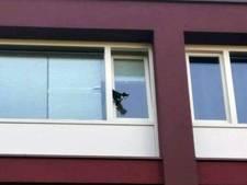 Ernstig gewonde kat hangt half uit raam op vier hoog