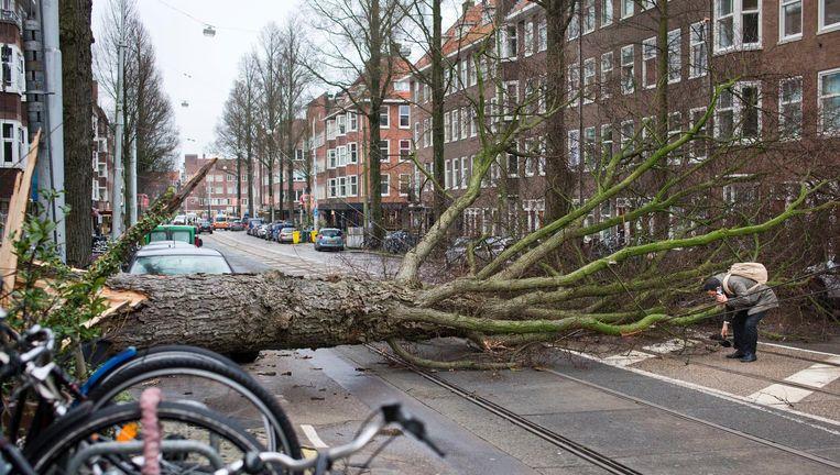 Een boom op de trambaan in Amsterdam Beeld ap