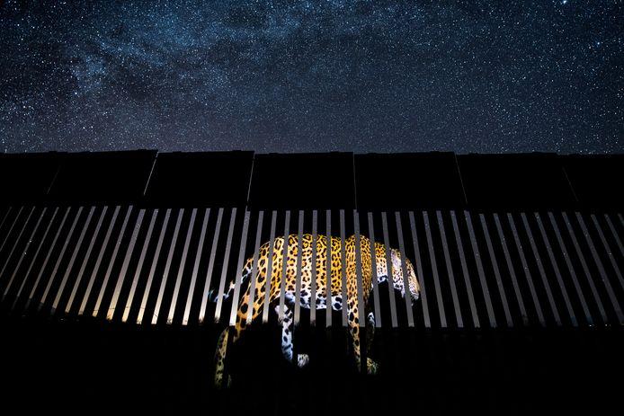 'Another barred migrant', Arizona, VS. Winnaar in de categorie Wildlife Photojournalism. Het kostte Alejandro Prieto twee jaar om de perfecte foto van een mannelijke jaguar te maken. Onder een stralende, met sterren bezaaide hemel van Arizona, projecteert hij het op een deel van het grenshek tussen de VS en Mexico om het verleden van de jaguar en zijn mogelijke toekomstige aanwezigheid in de Verenigde Staten te symboliseren. Als de muur is gebouwd, zegt hij, zal deze de jaguarpopulatie in de Verenigde Staten vernietigen.