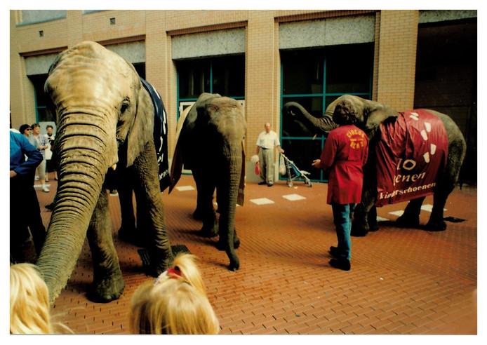 Olifanten in de Eindhovense binnenstad ter gelegenheid van de opening van kinderschoenenwinkel Tien Tenen