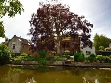 Zorgen over Nederlands oudste beuk in Haastrecht: 'Vitaliteit van boom loopt terug, maar dat is niet alles'