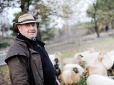 De schapen van Jos poepen voor een betere bodem: Schaapskudde Hof van Twente doet proef met kleine akkers