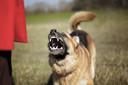 """Mensen met honden schrikken vogels sneller af dan mensen zonder viervoeter. ,,Het verstoringseffect van honden is groot"""", zegt Rogier Pouwels."""