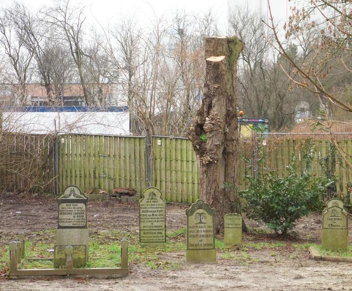 Meerdere bomen zijn gekapt of gesnoeid.