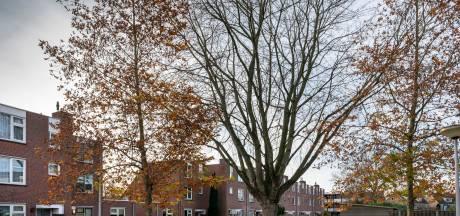 Net nieuw of niet, 'bomenplan Heusden is achterhaald'. Vindt de natuurvereniging