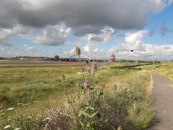 Het lijkt Amerika wel, met het verkleurde gras, het riviertje erdoorheen, de grote brug en de cactusachtige planten. Maar het zijn de uiterwaarden aan de Lek in Vreeswijk.