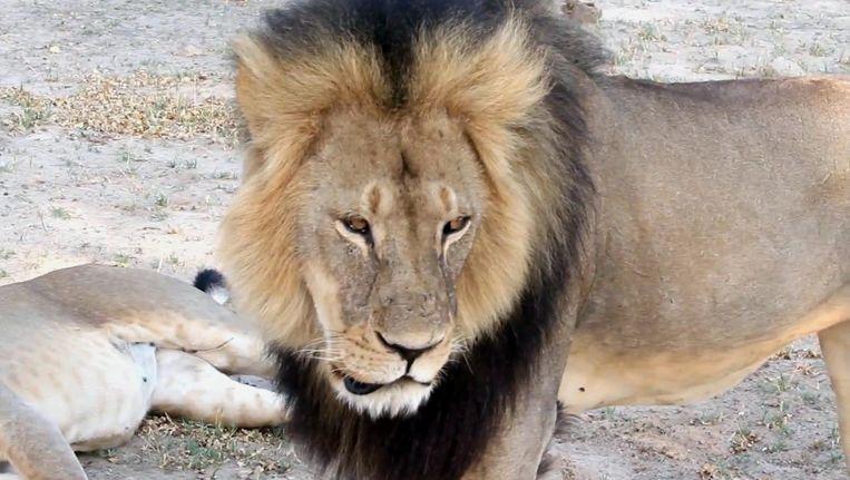 Archiefbeelden van Cecil uit 2012 Beeld ap