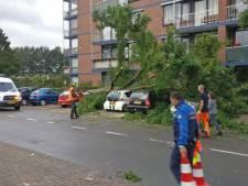Stormschade in Dordt: boom valt op auto's en woonhuis