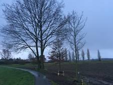 Waterschap kapt bomen zonder vergunning en plaatst nieuwe