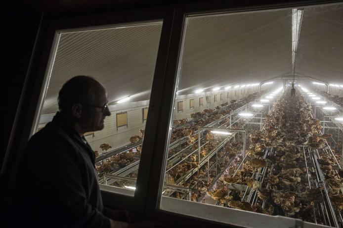 Egbert van Veen uit Bergentheim kijkt naar zijn kippenschuur. Zijn dames mogen normaal gesproken naar buiten maar moeten nu binnen blijven.