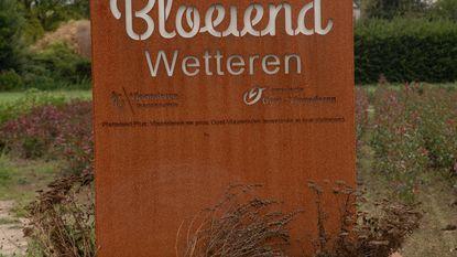 Hitte slaat harder toe in Wetteren dan in Laarne