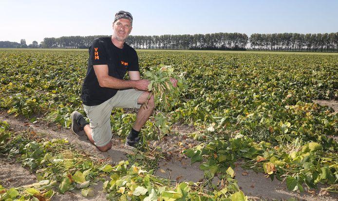Tonny de Koeijer met op zijn veld bruine bonen die net zijn uitgereden.