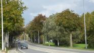 AWV vervangt twaalf dode bomen langs Elisabethlaan