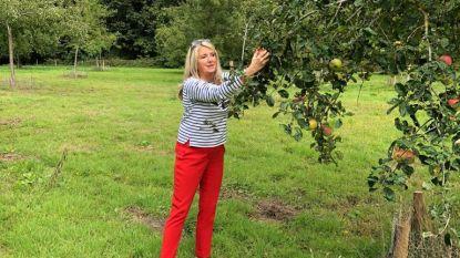 """Kom zondag fruit plukken in Chartreuzinnenbos en Beisbroek: """"Wees er vroeg bij"""""""