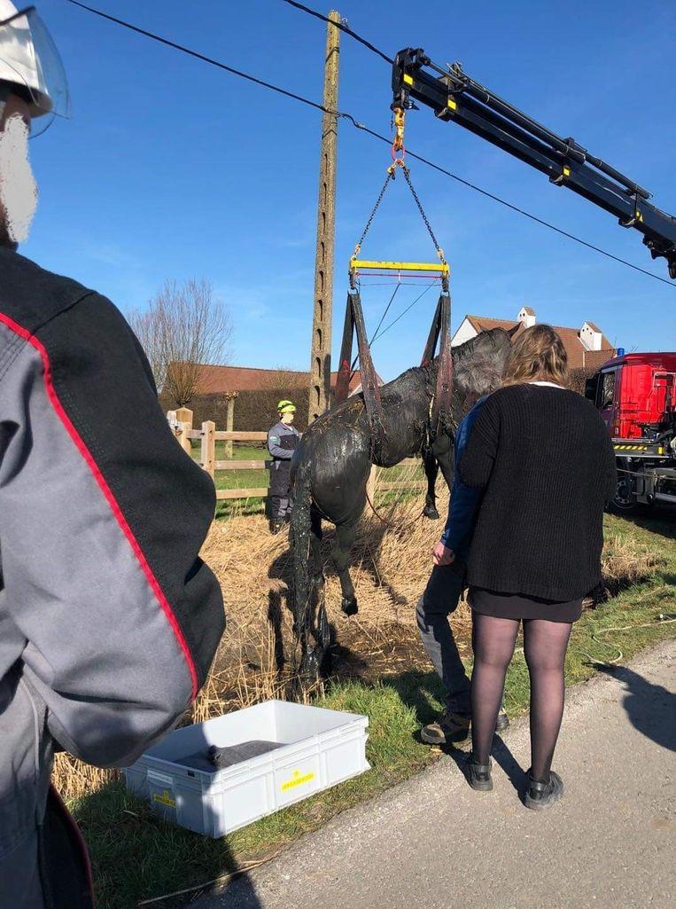 Het paard werd met een kraanvoertuig uit de gracht getild.