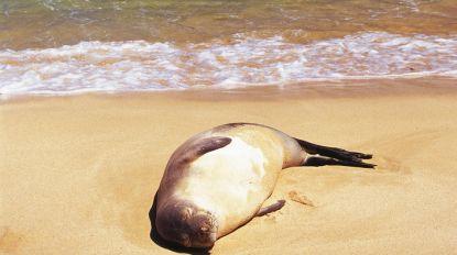 Zeehond doodgeschoten op strand nabij Calais
