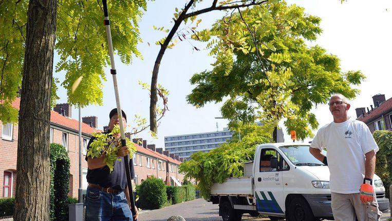 Deze boom is toe aan een snoeibeurt Beeld Marcel van den Bergh / de Volkskrant