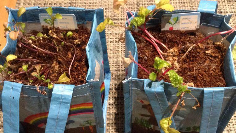 De vergeten groenten van Dianne Rozendal. Beeld Dianne Rozendal