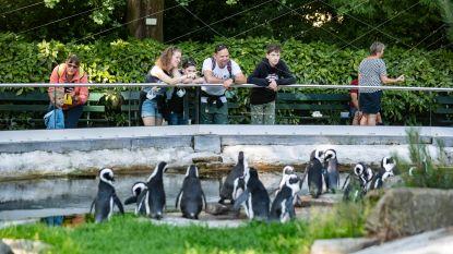 """""""Goedkoper naar dierentuin via Dreamland"""""""
