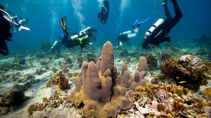 Nieuwe zaaimethode kan beschadigd koraal herstellen