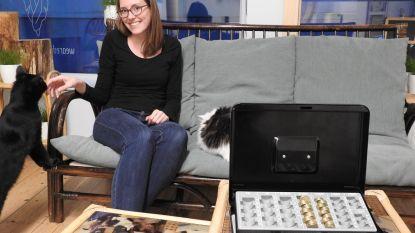 Dieven plunderen kassa en donatiepot Dreamcatchers