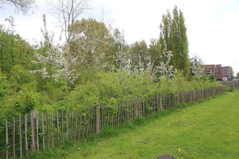 Het Gouwse Bos, een van de Tiny Forests in Zaandam Beeld Fabrice Ottburg