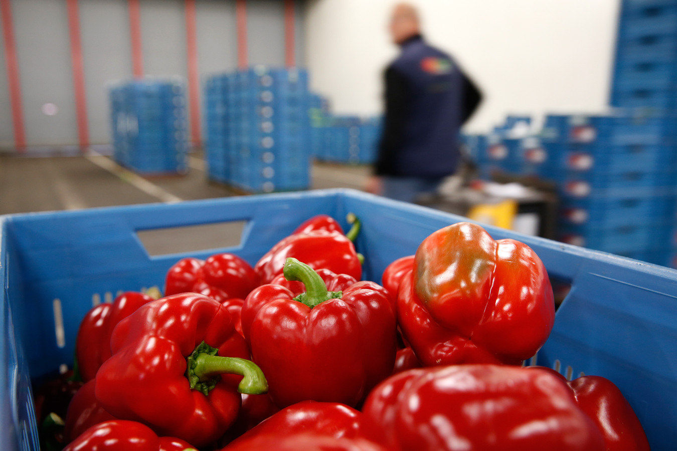 Export van groente