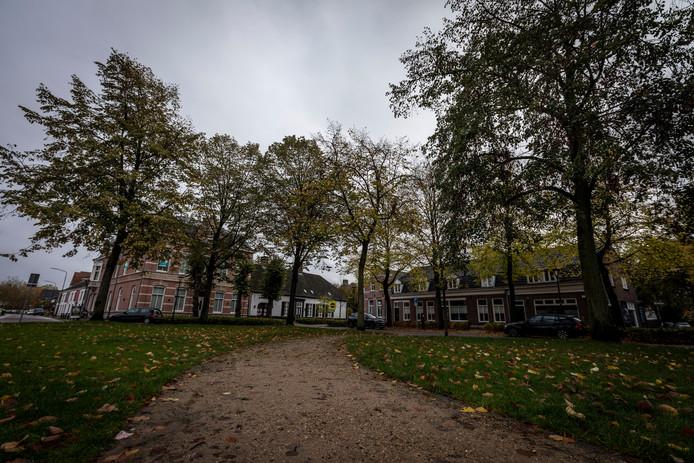 De bomen aan de Markt in Waalre zijn waardevol.