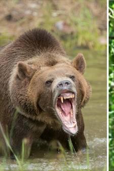 Tiener wordt wakker tussen kaken van een beer