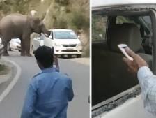 Un éléphant brise les vitres d'une voiture pour ramasser de la nourriture