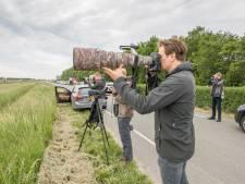 Vogelspotter Jaap uit Ermelo is speciaal naar Zeeland gereisd om een hele bijzondere arend te zien: 'Uniek'