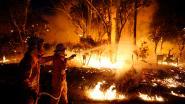 New South Wales opent onafhankelijk onderzoek naar oorzaak bosbranden