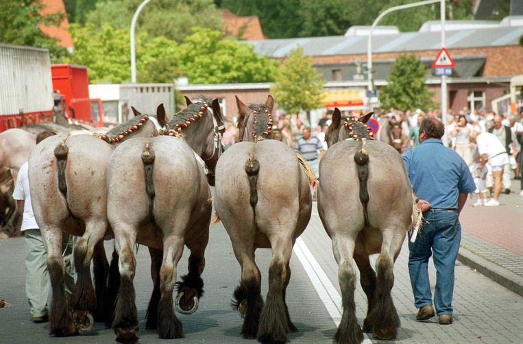 Illustratiebeeld: De paardenkeuring tijdens een vorige editie van de Wilrijkse jaarmarkt.