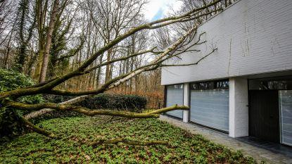 """Moet er nog wind zijn? Brandweer krijgt ruim 750 meldingen van stormschade: """"Uitzonderlijk veel"""""""