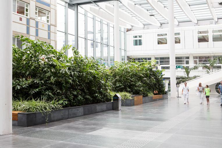 De centrale passage van het Erasmus Medisch Centrum in Rotterdam.  Beeld null