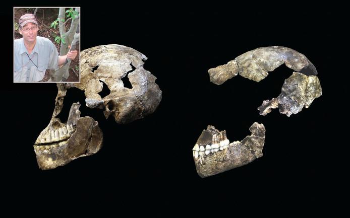 De schedel van Neo is bijna compleet. Nederlander Paul Dirks was betrokken bij het wetenschappelijke onderzoek naar de Homo naledi.