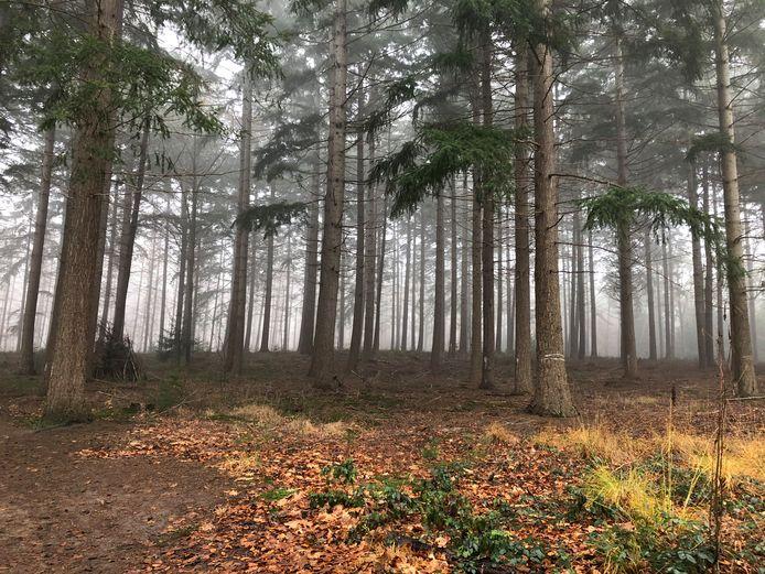 Het Agentschap Natuur en Bos wil kappen in het Vagevuurbos in Wingene