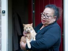 Kat Ginger uit Deventer overgoten met terpentine: 'Ze werd gek van dat bijtende spul'