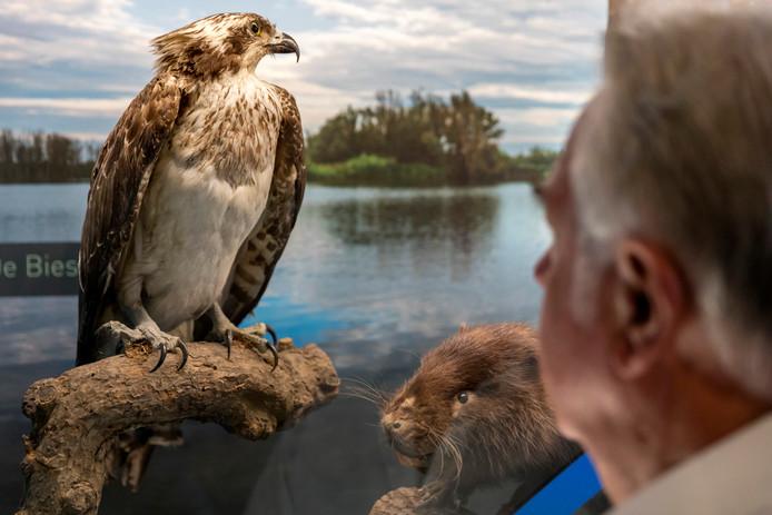 Directeur Frans Ellenbroek staat bij een visarend en een bever in 'zijn' Natuurmuseum Brabant in Tilburg. Het zijn dieren die leven op natte gronden.