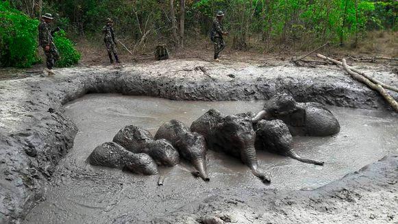 Boswachters ontdekten de zes babyolifanten in een modderpoel in het Thap Lan National Park.