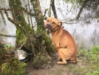 Franse jager vindt uitgemergelde hond die met ketting is vastgemaakt aan boom