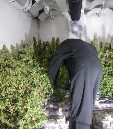 Penetrante henneplucht verraadt kwekerij in Meppel