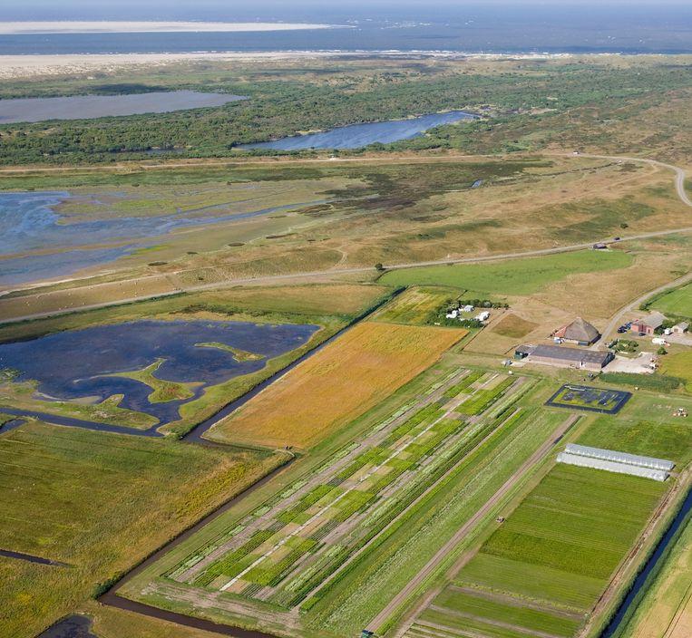 Salt Farm Texel, waar aardappelen, wortelen en bieten worden gekweekt op zoute grond. Links de plas met zout water. Beeld Flying Focus
