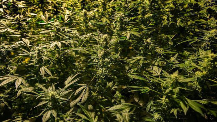 In totaal werden 565 planten gevonden