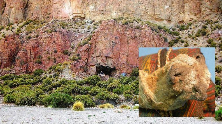 De verdovende middelen werden aangetroffen in een tasje - gemaakt van samengebonden vossensnuiten (inzet) - dat in een grot in de Andes lag.