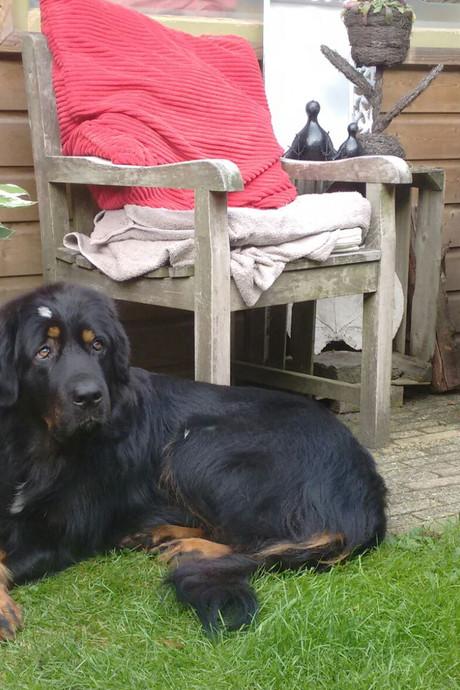 Hond houdt half Nunspeet in haar greep