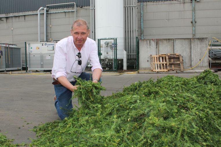 Een beeld van zaakvoerder Johan Agneessens, afgelopen zomer, bij een hoop taxussnoeisel.